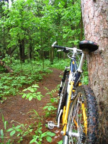 ottawa_foliage_bike_860826_l.jpg