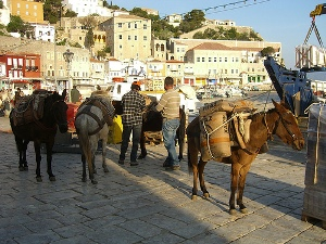 donkeys in the harbor