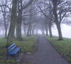 Trees in Athlone's Burgess park smothered by winter fog
