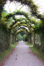 Overhead vines in Birr Castle gardens