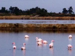3-flamingos